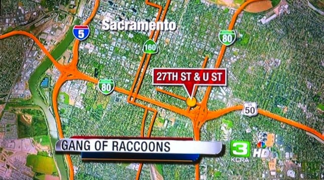 Breaking News: Gangs of Raccoons in Sacramento | Suburban Men on sacramento ca region map, la street gangs map, sacramento zip codes by street, sacramento on a map, sacramento ghetto, port of sacramento map, bloods and crips la street map, modesto gangs map, sacramento county gangs, sacramento street map, sacramento neighborhoods, cabrillo ca map, sacramento street names, sacramento community map, sacramento old map, sacramento casino map, sacramento police map, sacramento crime map, sacramento fires map, long beach gangs map,